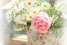 Flowers / Just Beautiful