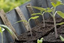 semis/jardinage