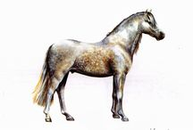 Breeds of horses / Sketches on some breeds of horses, I painted in acrylic.  Johann van Rossum © 1968 -2015