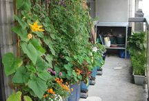 Eat Your Street / Edible Food Garden & Wildlife Corridors in Urban Spaces