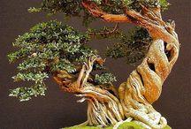 This is a bonsai world...