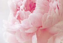 Vaaleita kukkia
