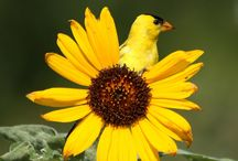 Bird Lover / by Carol Parcell