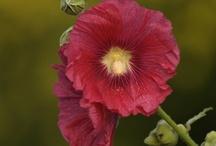 Garden-Fence Gardens / by Teresa Townsell