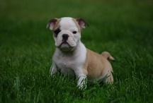 I WANT // DOG