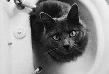 Cats. Gats. Gatos