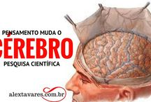 Psicólogo On-line: Pensamento Muda Cérebro? Pesquisa Científica de Harvard