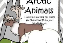 Theme - The Arctic and it's Animals / The Arctic Animals; Studying the Tundra