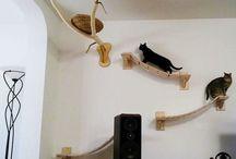 Mur à chat