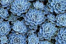 I've Got the Blues / Just because I love the color blue!