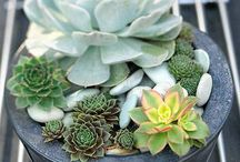 Grow A Green Thumb / Plants, flowers, arrangements and displays.