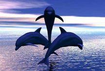 delfini / animali marini , furbi e giocherelloni