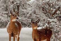 Herten / Winter