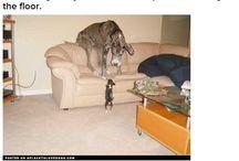sooky big dogs
