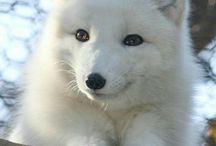 Bellecitas animales