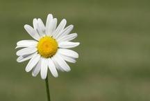 floral / by Patricia Tatgenhorst