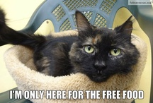 Feline Rescue Cat Memes / #cat funnies to share