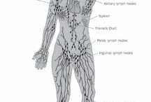 Bellabaci - Lymph System / The lymph system is a network of organs, lymph nodes, lymph ducts, and lymph vessels that make and move lymph from tissues to the bloodstream. The lymph system is a major part of the body's immune system. Lymphatic drainage massage is one of the best things you can do to help your body help itself.
