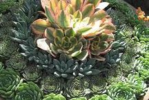 Succulents / by Paul J. Ciener Botanical Garden