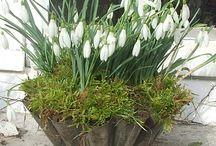 Spring Flowers / by Joanna Figueroa