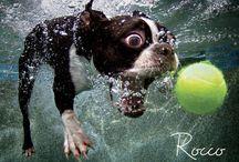 fion pod vodou