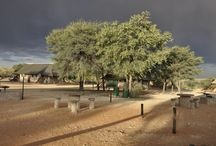 Kgalagadi National Park / en #AfriqueduSud et #Botswana