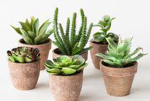 Succulents - Cactus .... / by Danièle