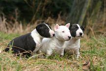 Cani e altri animali