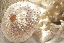 a shell of a design / by Jane Seal