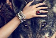 Amo lobo