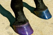 I like to paint my nails and so does my horse! / The ONLY colored hoof dressing! Pony Glam's Hoof Hi-Lites moisturizes and conditions the hooves, while adding the perfect amount of GLAM!! Does NOT stain!! 100$ Pony Proof!