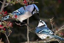 Eastern Ontario birds canada