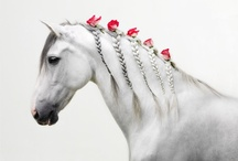 The Beauty of Horses / by Lydia BK