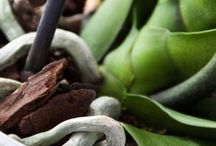Kräuter und Pflanzen