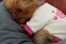 štěňátka / Cute dog