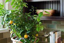 Augalai namuose