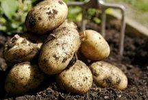 Ferme Michel Auger / La Ferme Michel Auger cultive de 8 variétés de pommes de terre afin de vous faire découvrir les différentes saveurs de ce légume.