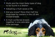 I Love Dogs! / by Melissa Lucarini Banas