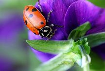 mooi fotos van natuur en diere
