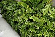plantas de meia sombra