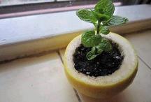 Zaden planten