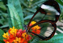 Insetti / Raccolta di varie specie di insetti in grado di volare. La scheda informativa di ognuno di essi si trova sul sito di Animali Volanti.
