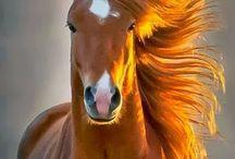 @Cavalos