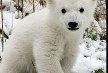Polar Bears / by Tracy Edley