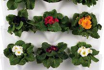 Verde / Plantas y decoración