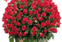 Buy Red Roses Basket Online for any Occasion / Flowers Cakes Online Team Launches Android App for all Online Products like flowers,cakes, chocolates  and many other products. When You Order Flowers  in  India, or purchase a delicious cake online or send a gift  across  India in any occasion you just download FlowersCakesOnline app and buy any products with huge options and discounts.