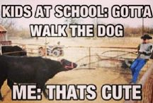 show cows