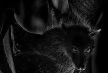 Fledertiere / Batty Bats