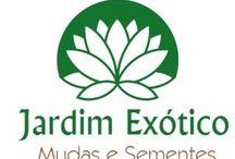 Jardim exótico mudas e sementes