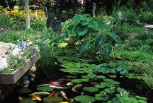 pond water garden